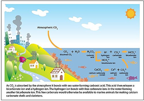 acidification_chemistry_chart_3