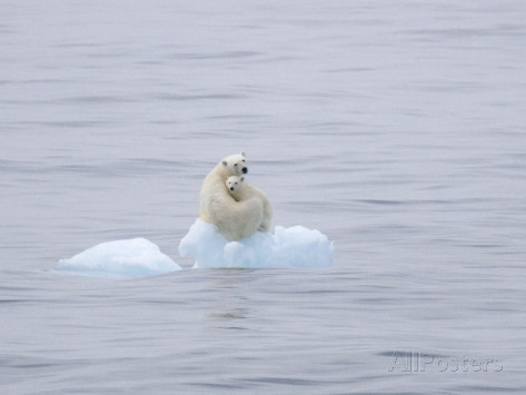 ira-meyer-polar-bear-and-cub-on-a-floating-chunk-of-ice