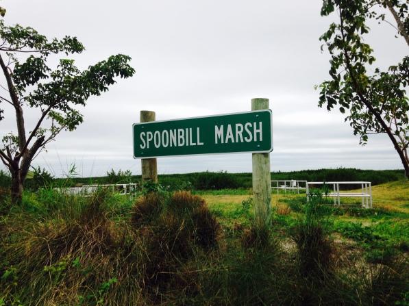 Spoonbill sign