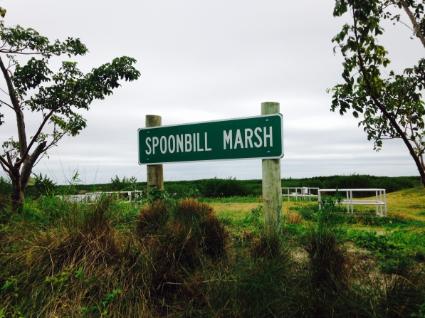Spoonbill sign