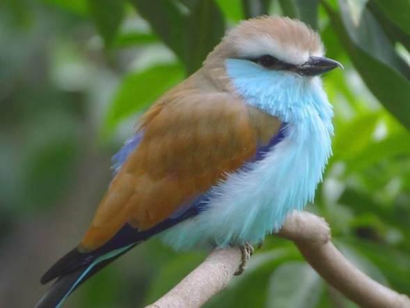 Bird 1A