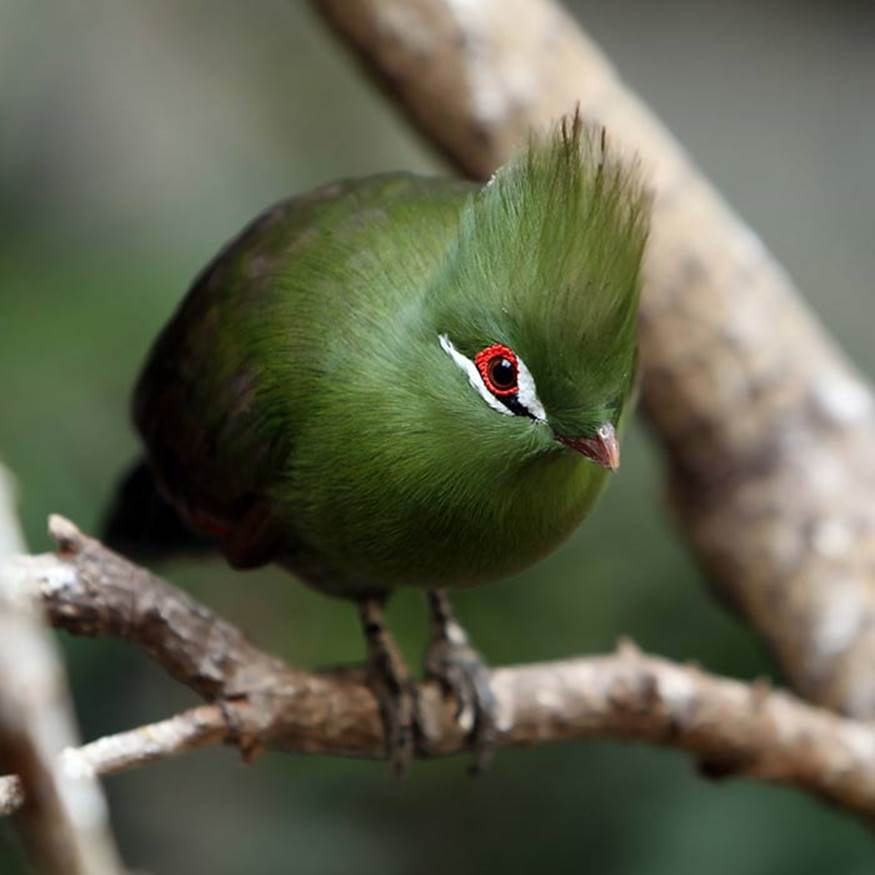 creation by god fabulous birds and beautiful sayings