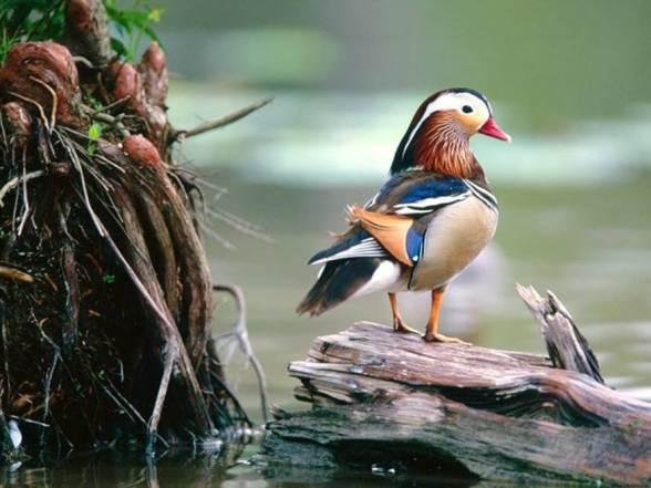 Compassison Bird
