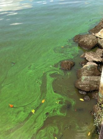CP_Static_Algae_bloom.jpg_3613029_ver1.0_640_480