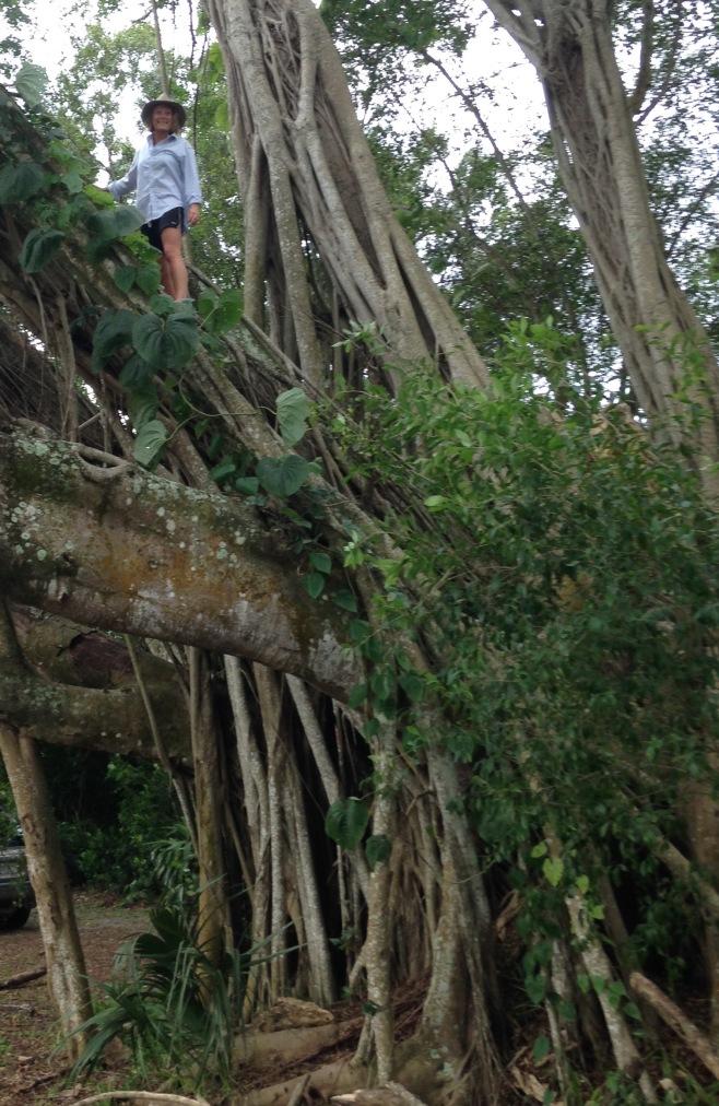 Sallie in Banyan