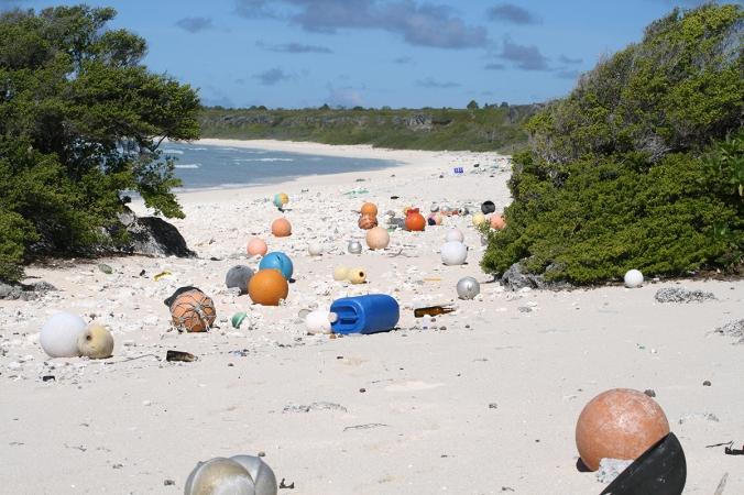 4. Henderson Island Beach