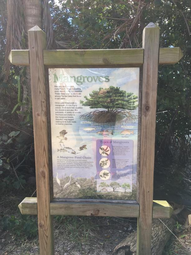 Jones mangroves