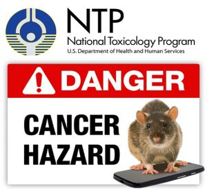 ntp-finds-cancer-link-from-cell-phone-radiation-in-rats-300x277