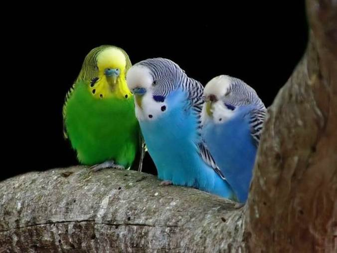 bird-6