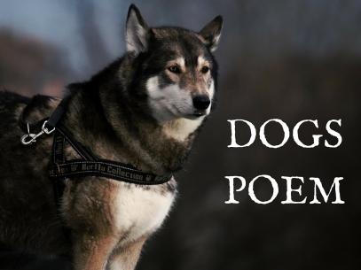 DOGS-POEM